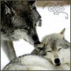 kyiyu: (Two wolves Flourish)