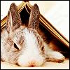 niqaeli: a bunny half under a book (bunny)
