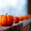 semielliptical: pumpkins (pumpkins)