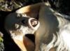 lemur1: (корова)