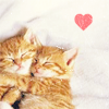 supermagpie: Two small orange kittens hugging with a small heart in the top-right corner. (kitty heart)