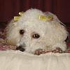 onceuponatime: My dog~ (Default)