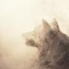asavagegarden: (wolf1)