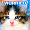 jayeless: *WORRIED* (worried)