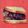 fish_echo: Cat between two slices of bread (Misc-Cat Sandwich)
