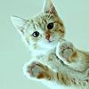 a_lone_flame: ([GINO] ☼ meow?)