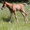 jennyaxe: (foal)