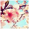 dreamer_ryoko: (obligatory sakura icon)