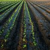 apogee_of_celery: (sprouting)