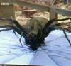 spiderplanet: (spider)