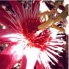 sa_kun: Passiflora (passiflora)