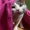jassanja: (Cats - Cute Cat under blanket)