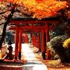 rhi: red Japanese gateways under fall leaves (gateways)
