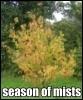 linda_joyce: (Autumn)