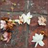 kaigou: (5 flowers on brick)