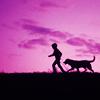 lifeaslizzie: (dog)