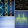 bioinformatics: A montage of biotech imagery, such as DNA helices and gel electrophoresis. (biotech)