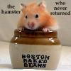 kageygirl: (hamster who never returned)
