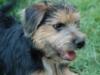 mardiquinn: Hicks (Search dog)