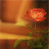 plumwine: (fleur)
