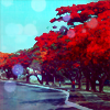 revere: (red trees) (Default)