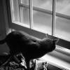 green_dreams: (cat at window)