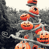 green_dreams: (Hallowe'en Tree)