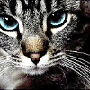 green_dreams: (green-eyed grey-faced peering cat)