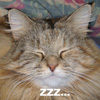 bunny_m: Dervish T. Fluffybritches, snoozing (Default)