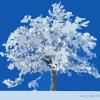 cephy: (winter)