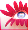 bossymarmalade: blue eye with lashes of red flower petals (non-denominational)
