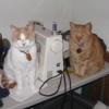 annaoj: (bothcats)