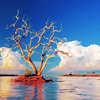 ext_14950: A tree on the water, surrounded by clouds.  (Default)