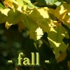 crazylilly: Mine (fall)