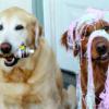 kaiserkuchen: (Dogs! P-P-PARTY TIEMZ)
