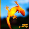 hopefulnebula: An orange lizard walking on glass. Text: Defy Gravity (Defy Gravity)