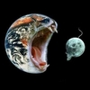 hopefulnebula: Photoshop of Earth with a cat mouth and the Moon with a mouse tail (Space Wars)