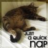 hopefulnebula: My cat having a nap on the bed (Athena Nap)