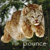 blueraccoon: (pounce)