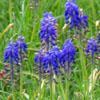 barefootsong: bluebells and green grass (Default)