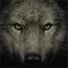 amaniwolf: (Default)