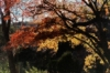 laure_nar: (Fall, Lost Maples)