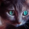 puggle: (cat eyes)