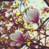 fantaxiah: (magnolia)