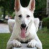 onlyhonournow: (「犬」)