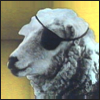 ext_939: Sheep wearing an eyepatch (skywardprodigal Cog Flowers)