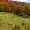 thothmes: A still-green field with vivid fall foliage behind it (Fall Field)