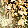 dangerous_dreams: (Window in leaves)