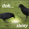 "darchildre: two crows looking at a shiny thing.  text:  ""ooh, shiny"" (shiny)"