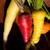 pinepigs_garden: white, purple and orange carrots (rainbow carrots)